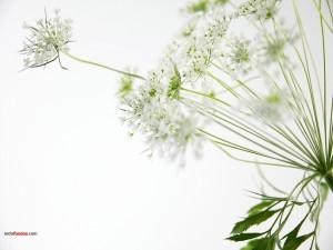 Postal: Flores ramificadas