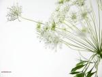 Flores ramificadas