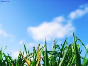 Postal: Naturaleza a ras de suelo