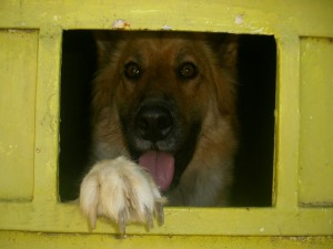 Postal: Perro por correo