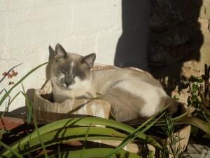 Postal: Gato tomando el sol en el jardín