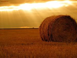 Postal: Rayos de sol sobre un campo de heno