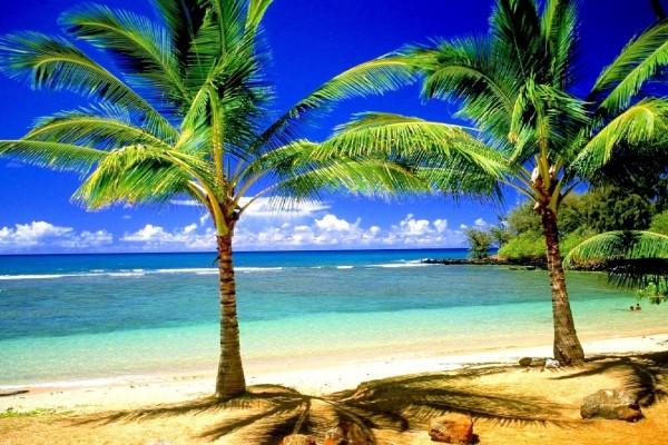 Un par de palmeras a la orilla de la playa