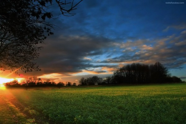Los rayos del Sol iluminando el campo