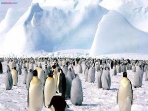 Postal: Colonia de pingüinos