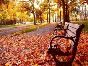Postal: Hojas sobre un banco del parque