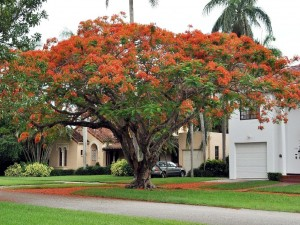 Postal: Árbol colorido en una zona residencial