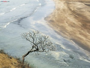 Árbol frente al mar