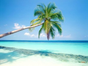 Postal: Palmera haciendo sombra en la playa