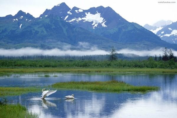 Cisnes en un lago al pie de la montaña