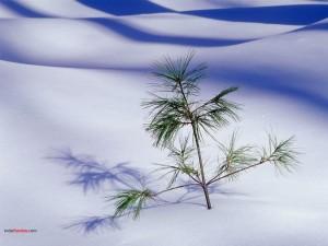 Planta asomando por la nieve