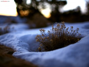 Plantita rodeada de nieve