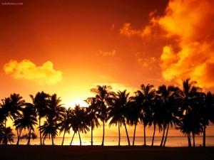 Postal: Línea de palmeras sobre un cielo rojo