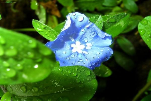 Flor húmeda