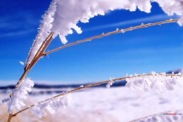 Ramita con nieve