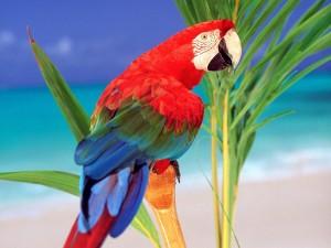 Postal: Loro multicolor