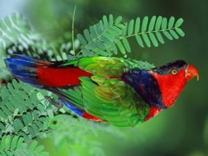 Loro de vivos colores