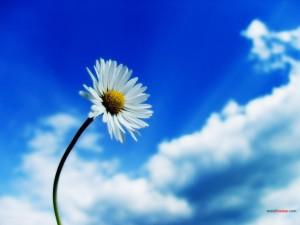 Postal: Margarita bajo un cielo azul