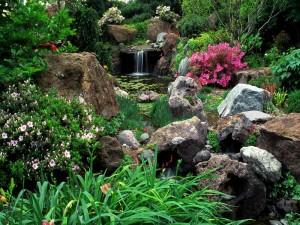 Un estanque muy florido