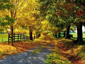 Postal: Camino lleno de hojas