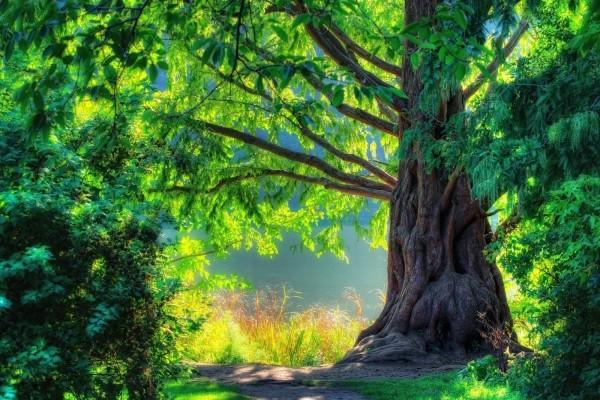 Árbol resplandeciente