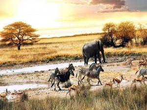 Postal: Fauna africana