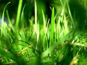 Postal: Hierba verde