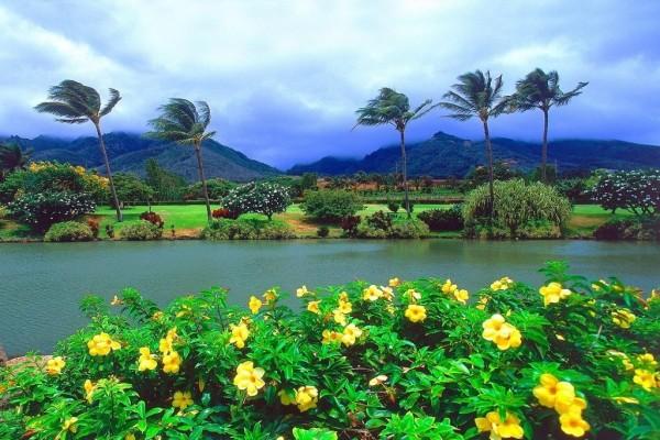 Finca tropical
