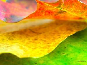 Hojas con bonitos colores