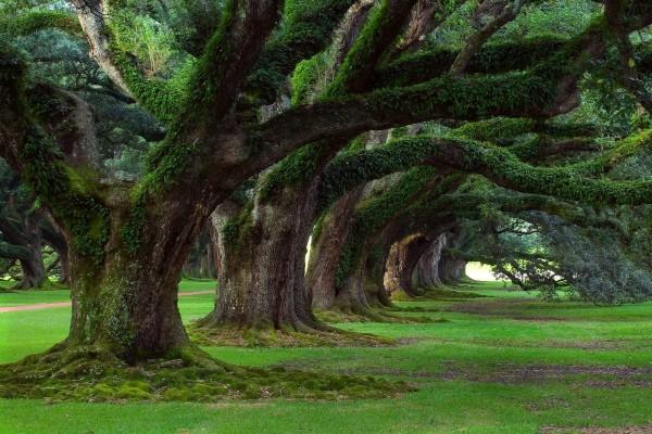 Árboles milenarios