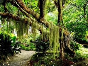 Árbol de cuento de hadas