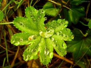Gotas de agua sobre una planta