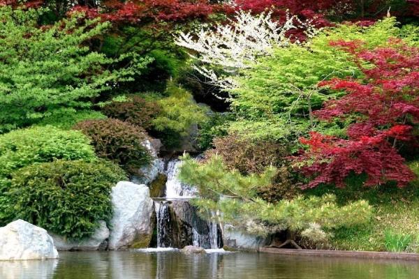 Cascada entre árboles de varios colores