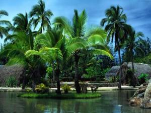 Postal: Islote de palmeras