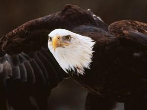 Postal: La mirada del águila