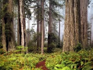 Postal: Sendero entre árboles