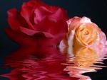 Rosas sobre el agua
