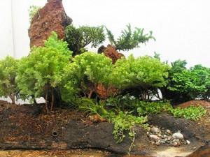 Plantas y piedras