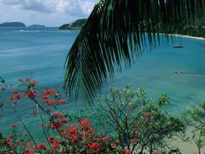 Vegetación a la orilla del mar