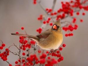 Pájaro posado sobre una rama con bayas rojas