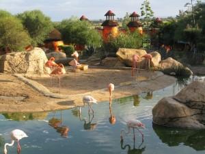 Flamencos en el Zoo