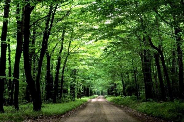Camino de arboleda