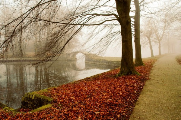 Puente en la niebla