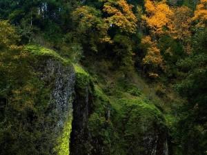 Musgo en la roca