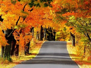 Carretera dorada