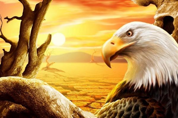 Águila contemplando el desierto