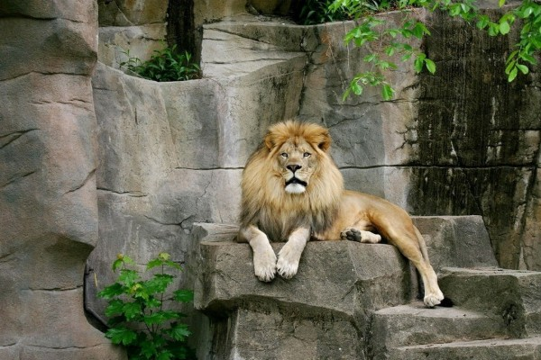 León en el Zoo