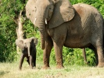 Elefante con su cría