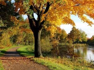 Postal: Camino en la vereda del río