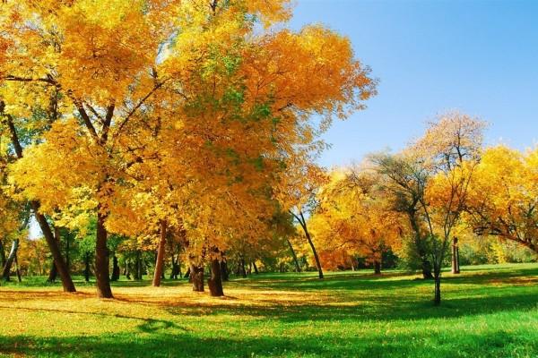 Árboles de hojas amarillas y hierba verde